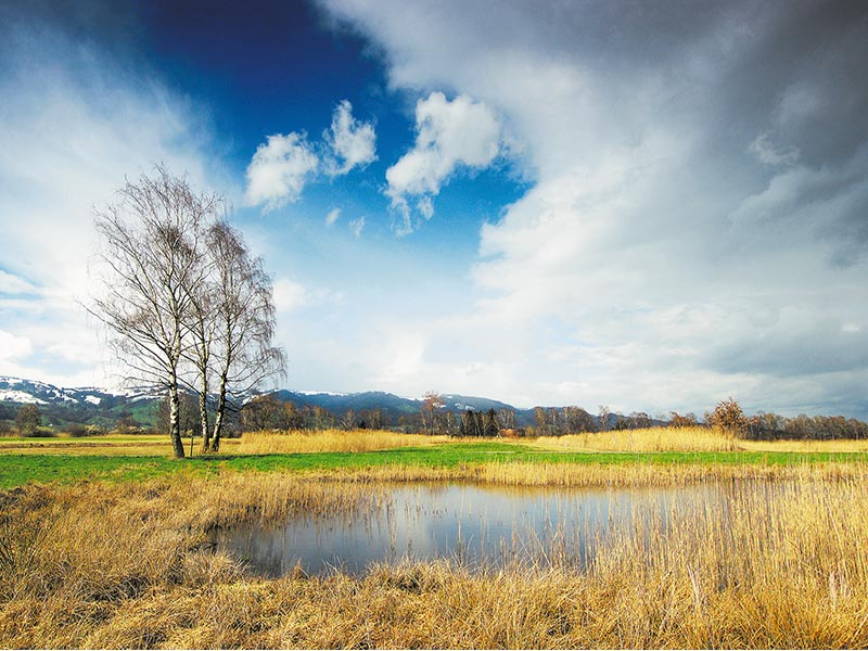 Landschaft-Riet_Gallerie
