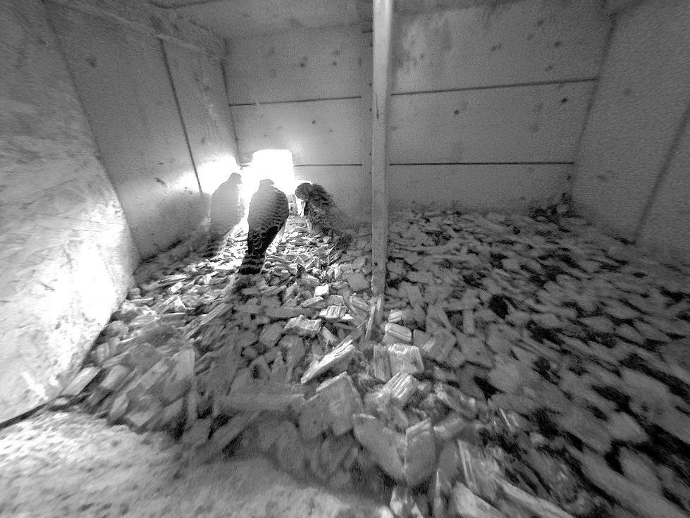 14.6.2021 Es scheint als könnten es die Turmfalken-Nestlinge kaum erwarten den Nistkasten das erste Mal zu verlassen.