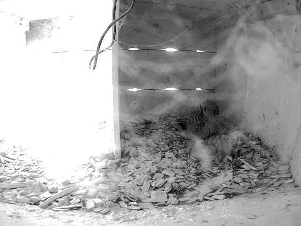 14.6.2021 Das Gelege wurde noch auf 5 Eier erweitert und nun sind auch bei der Familie Steiger die ersten Küken geschlüpft.